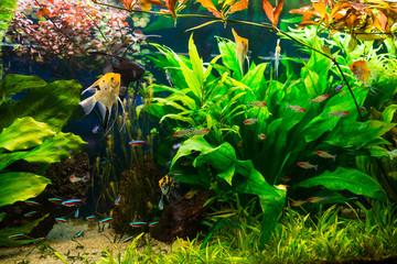 Aquarium full of plants and fishes