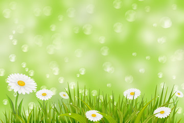 Spring background with grass and daisies