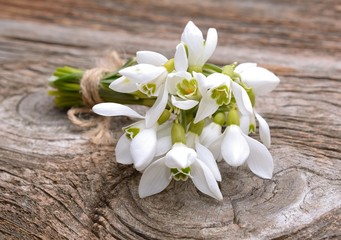 Bouquet of the first spring flowers - snowdrops
