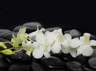 Set of white branch orchid on zen stones