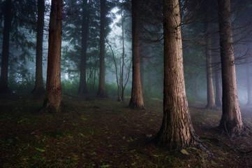 Fototapeten Wald dark forest