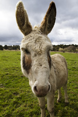 beutiful donkey on the nature