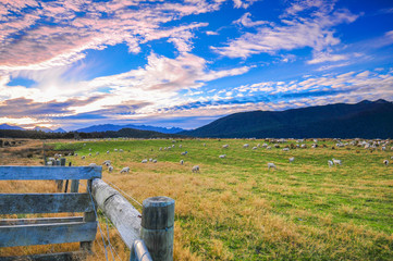 Sheep among New Zealand hills Beautiful Landscape