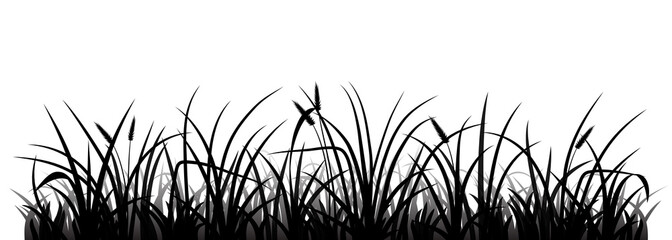 Wall Mural - Meadow grass silhouette, vector illustration