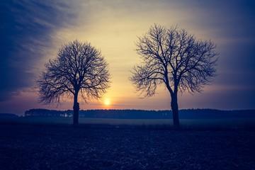 Vintage photo of autumn trees on field.
