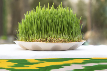View of Sabzeh - sprouted wheat germ for Nowruz celebration