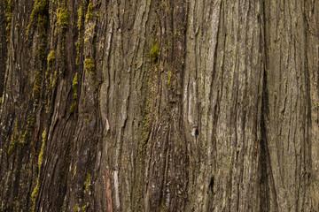Brown Cedar Bark Close up