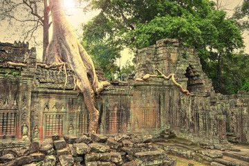 Ruins of ancient temple lost in jungle with a tree growing strai
