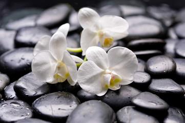 Set of white branch orchid on wet zen stones
