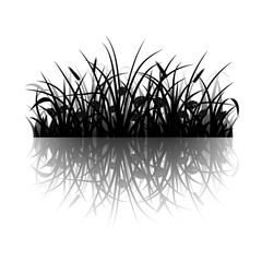 Wall Mural - Meadow grass silhouette with reflection, vector illustration