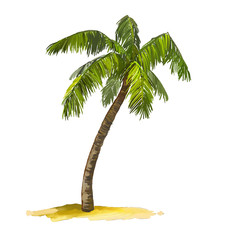 palm tree vector illustration  hand drawn  painted watercolor