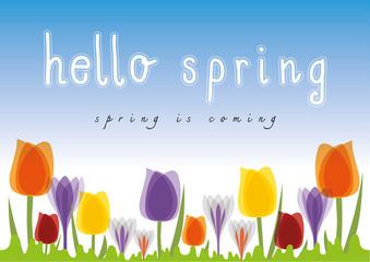 Hello Spring Tulip blue sky background