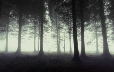 Poster de jardin Foret gloomy forest with fog