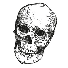 skull black and white drawing