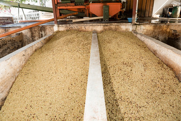 coffee washing station in Guatemala