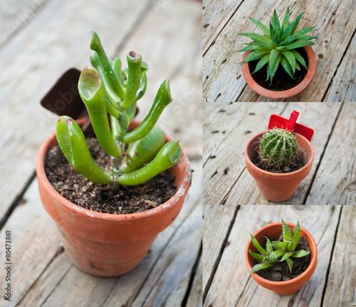 composition cactus en pot sur table en bois photo libre. Black Bedroom Furniture Sets. Home Design Ideas