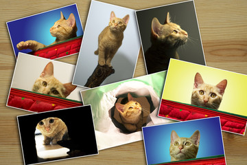 photo collage of cat