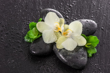 Orchid flowers, green leaves, stones and water drops