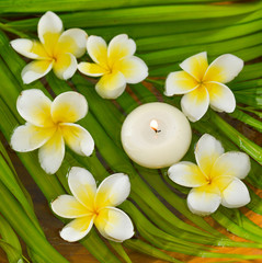 White frangipani with candle and wet palm leaf texture