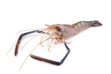 Giant freshwater prawn, Fresh shrimp isolate on white
