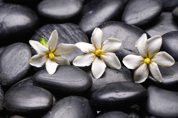 Set of gardenia on black pebbles