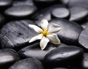 Gardenia on black pebbles