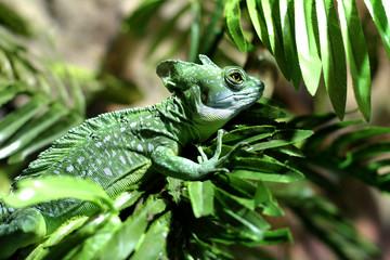 Exotic reptiles in their natural habitat