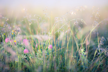 Abstract image of meadow