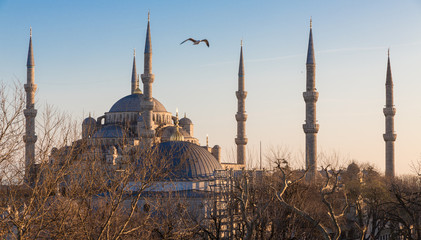 Blue mosque and seagull at sunset, Istanbul, Turkey