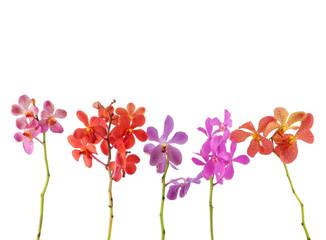 Set of colorful gerbera flowers