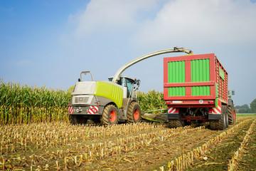Wall Mural - Maisernte, Maishäcksler und Erntewagen auf dem Maisfeld