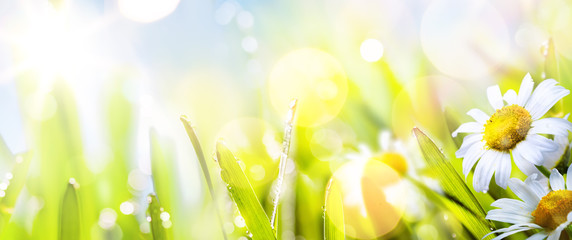 Fototapete - art abstract sunny  springr flower background