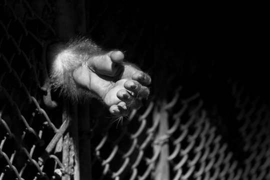 monkey hand out from the cage of zoo