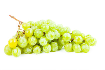 vine isolated on a white background