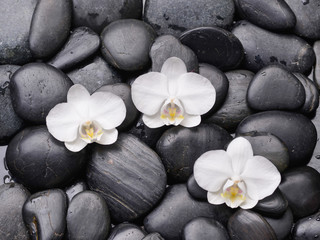 white orchid and back stones background