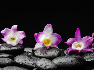 beautiful pink and red orchid on wet pebbles