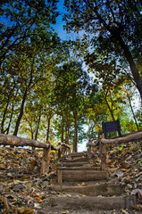 stairway and green leaf  have  blue skybackground