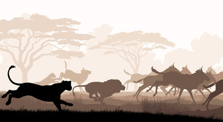 Hunting lions
