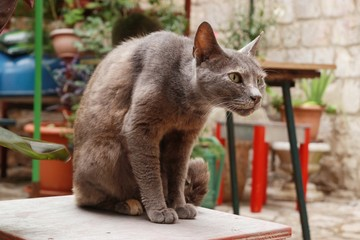 Cat's position on the table