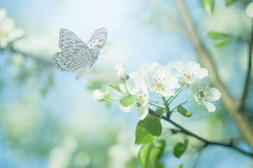 Obraz Pastel colored photo of butterfly and spring flowers - fototapety do salonu