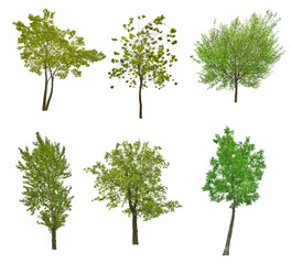 collection of six green trees isolated on white