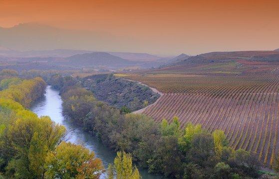 Vineyards in La Rioja, Spain.