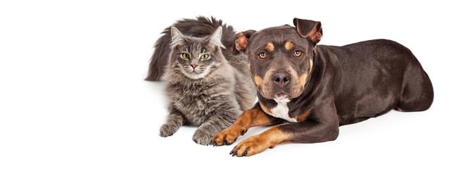 Dog and Cat Social Media Header