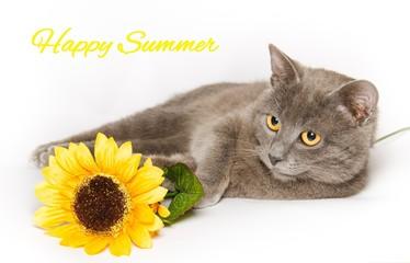 Cartolina di buon estate