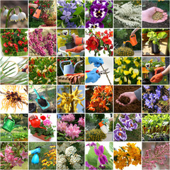 Spring in the garden - colorful collage