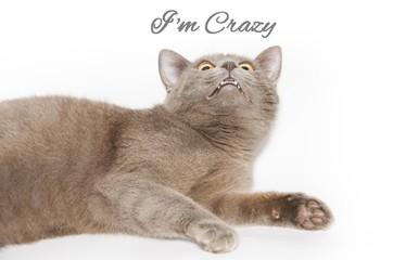 Sono pazzo