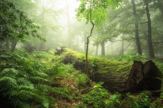 Ökosysteme der Wälder