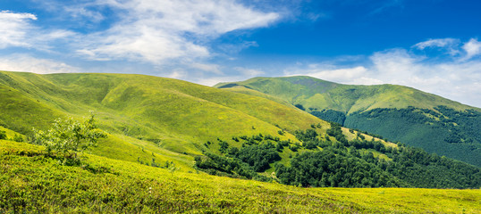 summer green meadow in mountain panorama