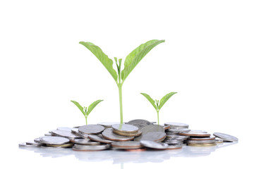 Plant growing out of coins , isolated on white background