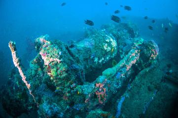 shipwreck bunaken sulawesi indonesia underwater photo